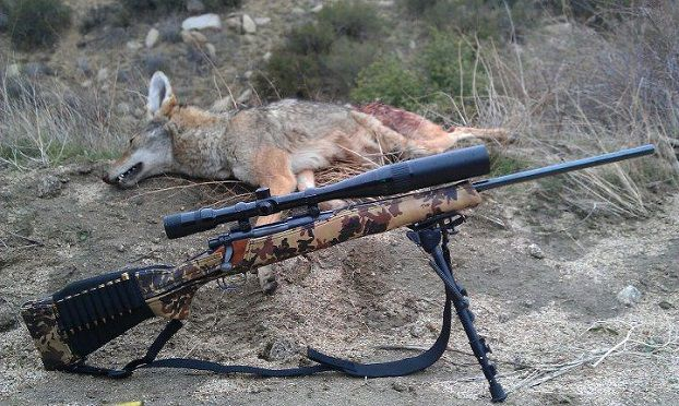 bipod for coyote shooting