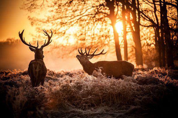 Best Deer Decoys Review