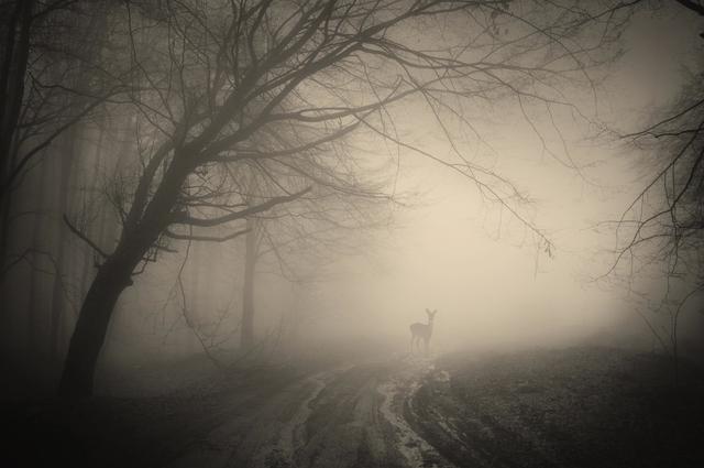 deer move in the rain storm