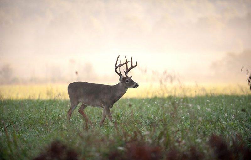 benefits of deer feeder