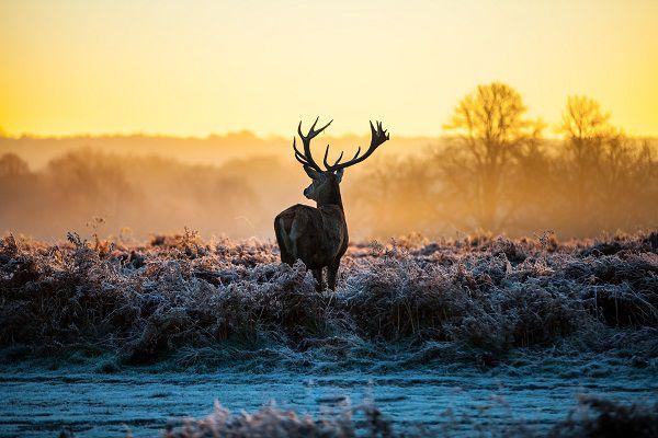 deer decoying mistakes