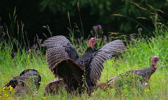 turkey calling mistakes