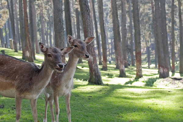 Best Deer & Rabbit Repellents