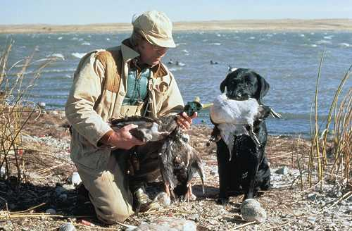 Hunter beside a blue lake with hunting dog and ducks